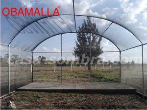Mallla-sombra en cultivo