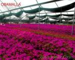 horticultura en invernadero